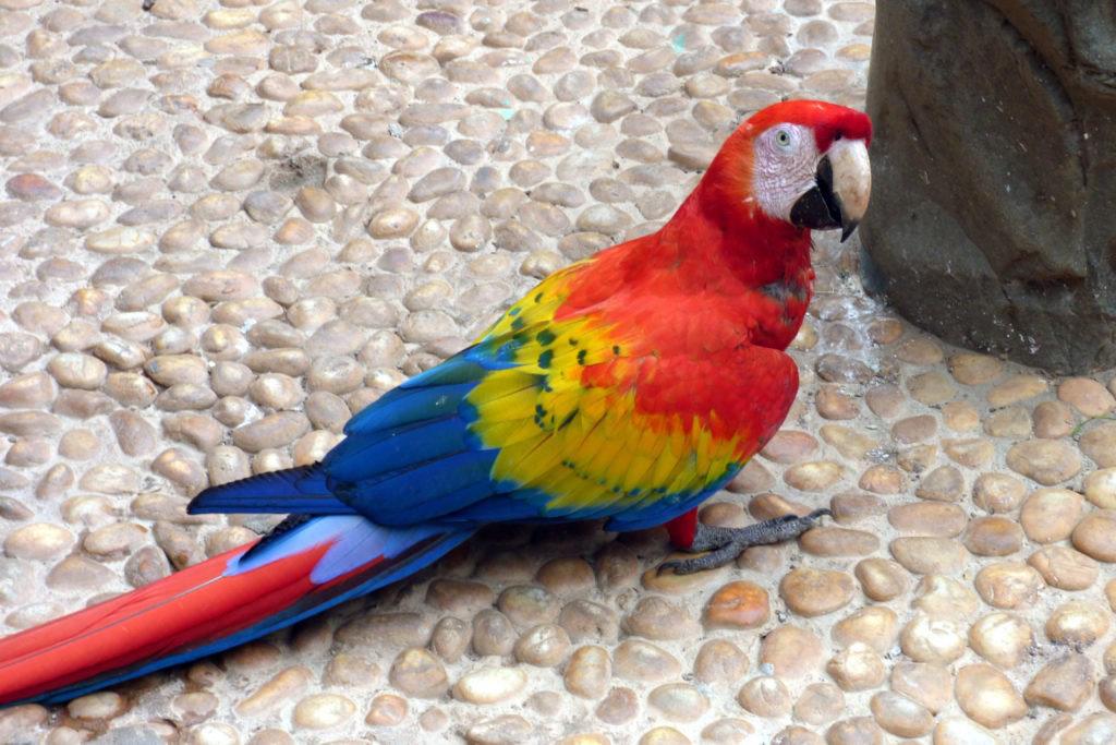 Animali in Messico