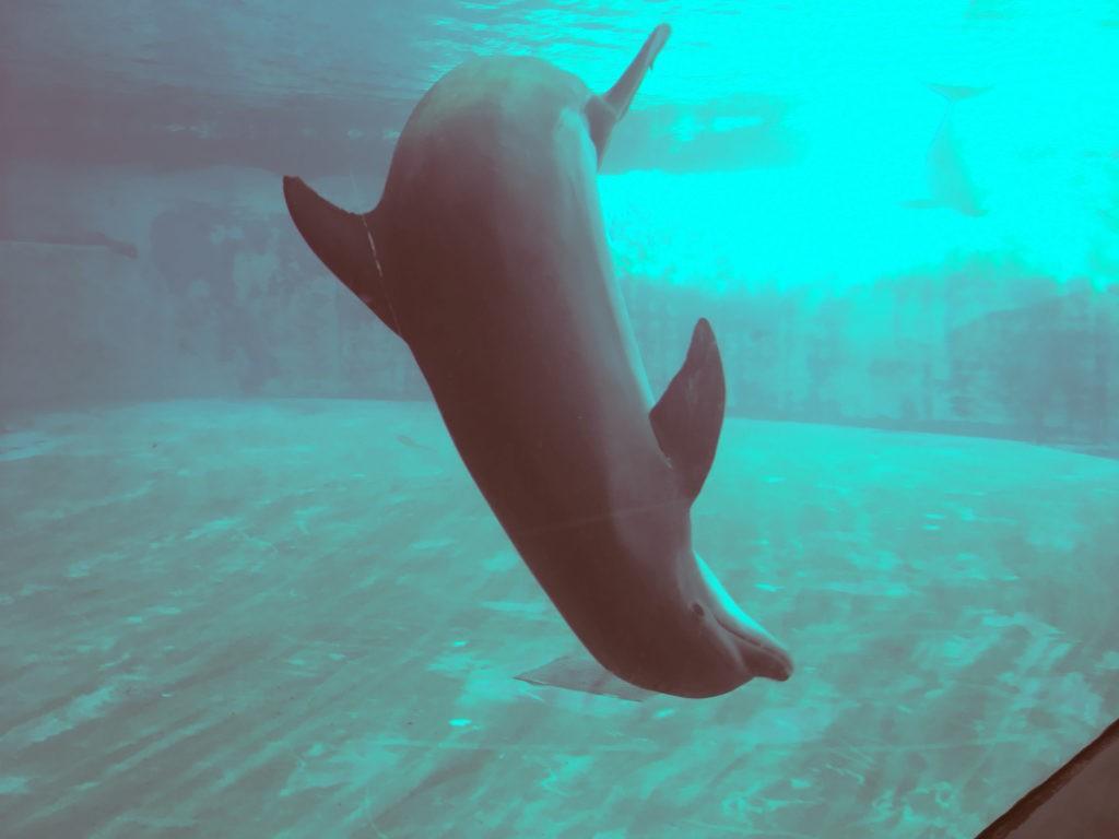 La capriola del delfino