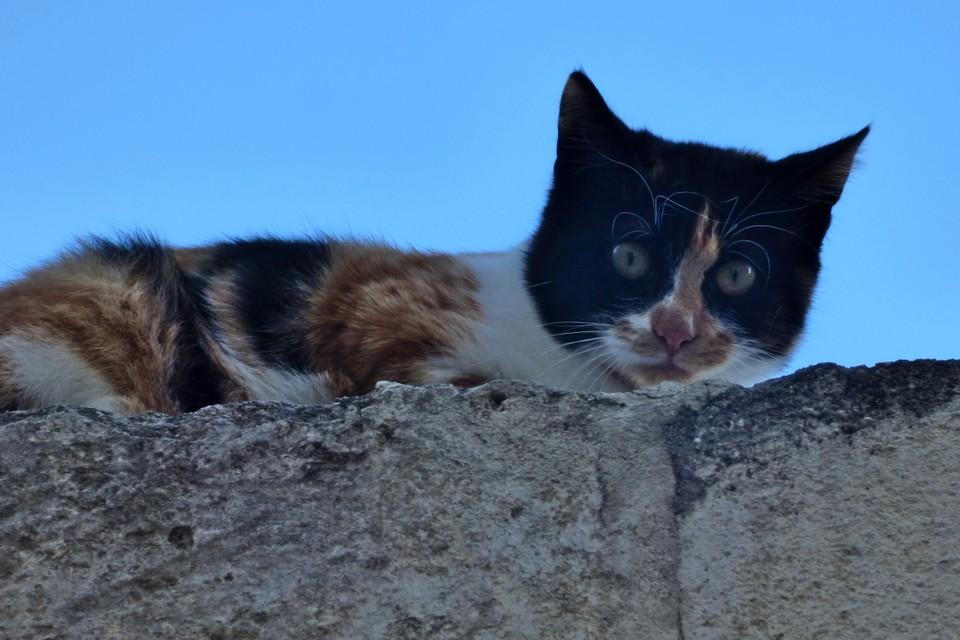 Gatti di Matera