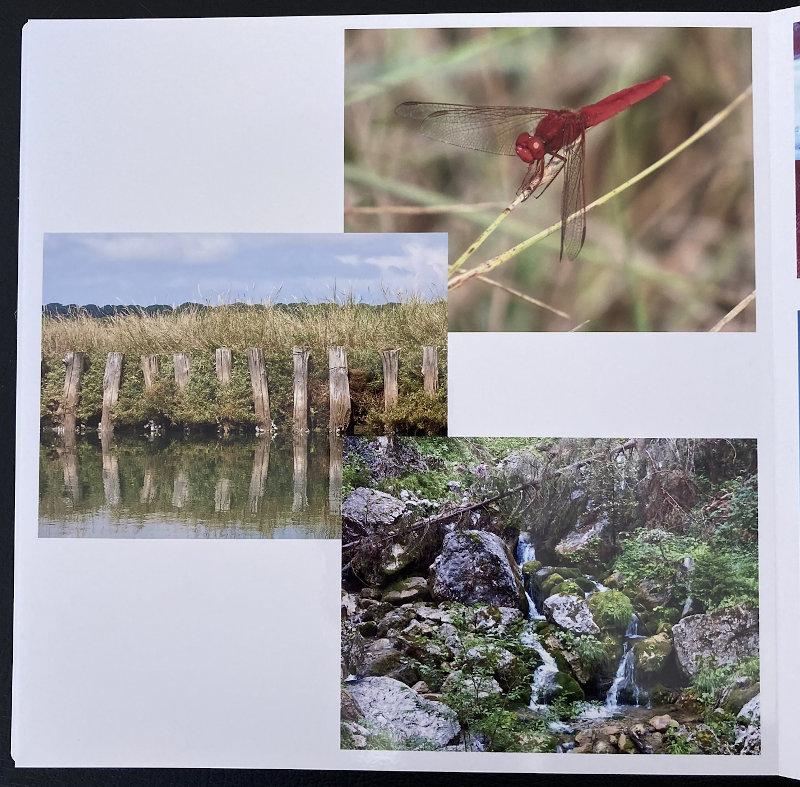 Fotolibro Saal Digital - Recensione - software